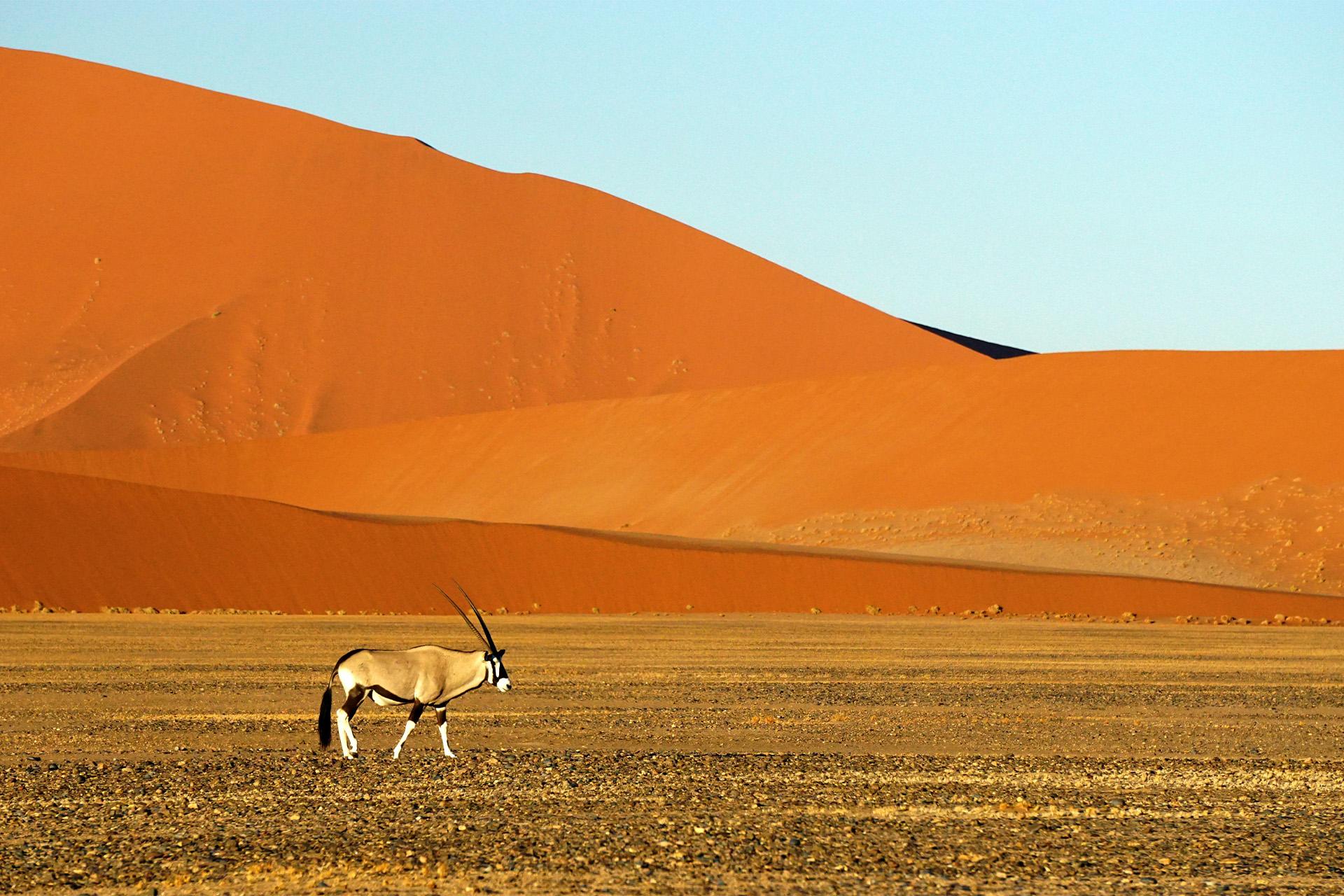 Namibia Desierto2