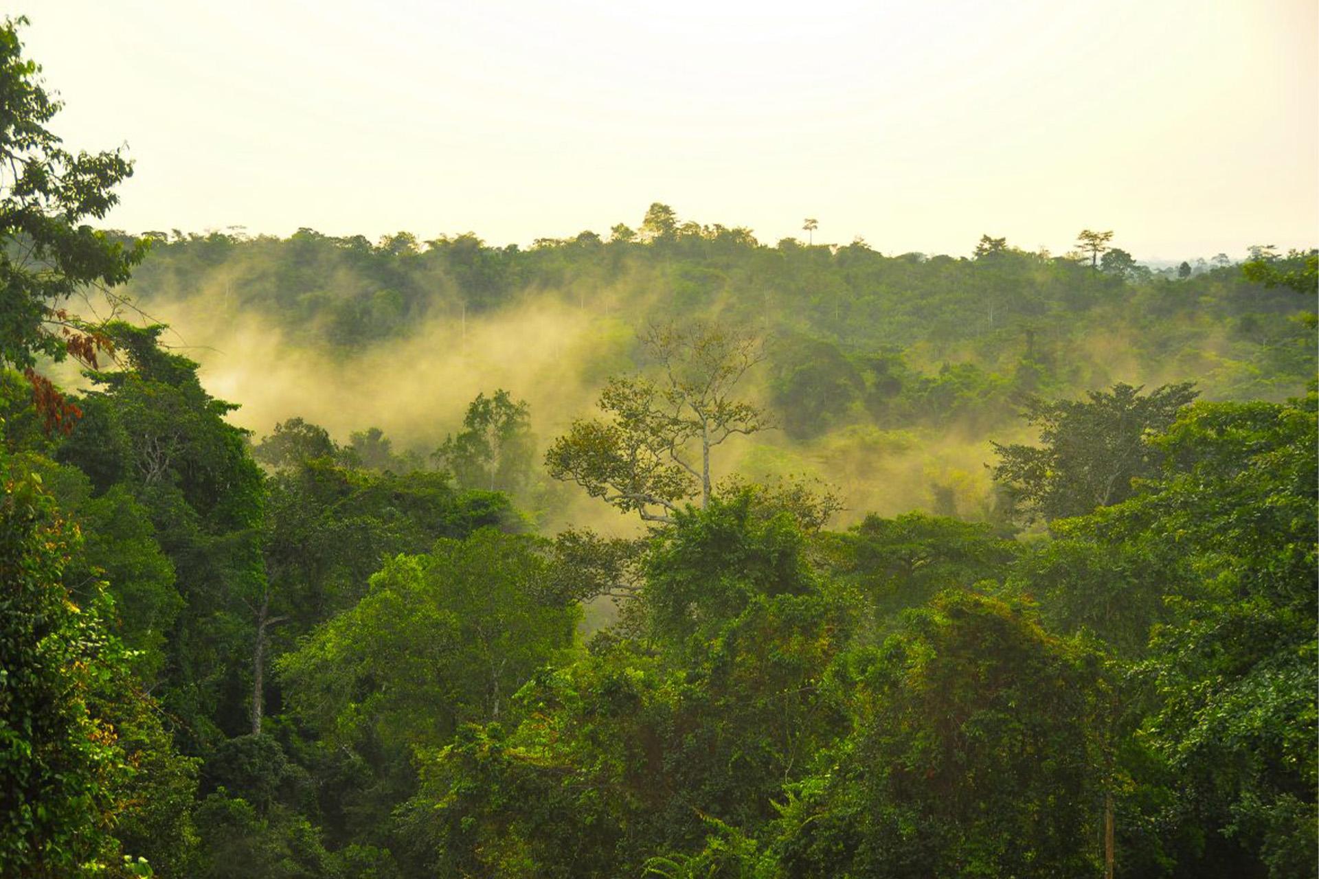 Parque Nacional de Kakum2