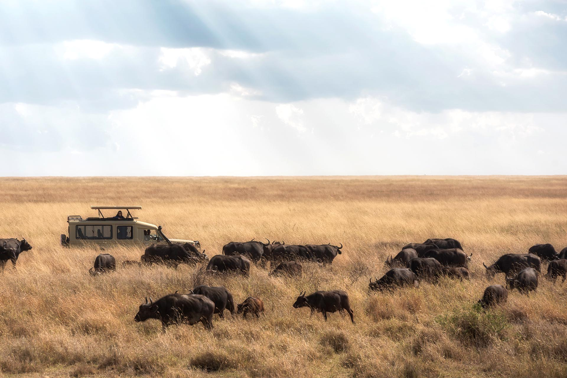 Serengueti2