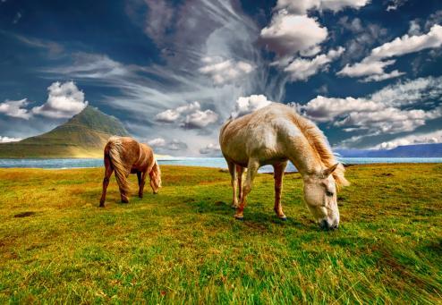 islandia-reikiavik-escandinavia-e975deafb37d84687010d93ba76115a1